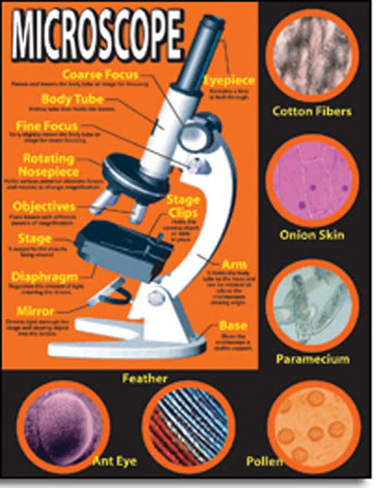 BASIC MICROSCOPE CHARTLET