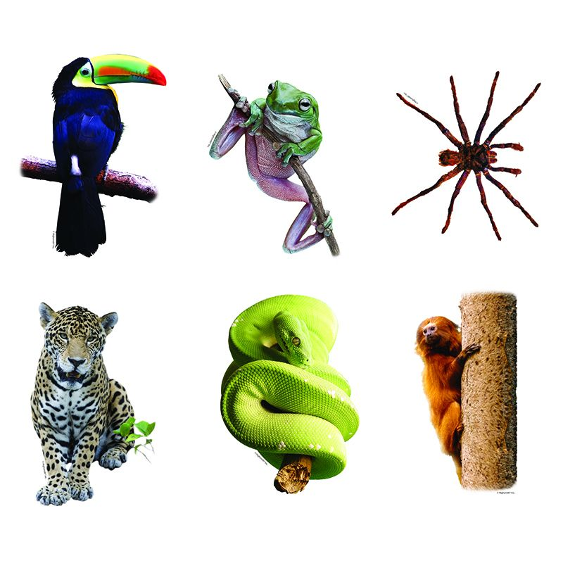 RAINFOREST ANIMALS BB ACCENTS