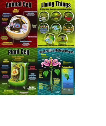 LIFE SCIENCE TEACHING POSTER SET
