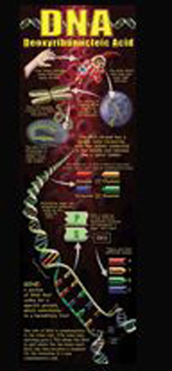 DNA COLOSSAL POSTER