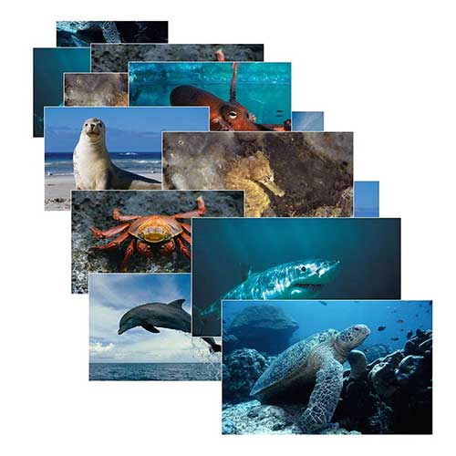 SEA LIFE 14 POSTER CARDS