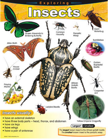 CHART EXPLORING INSECTS GR 1-5